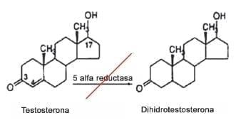 Testosterona en Dihidrotestosterona
