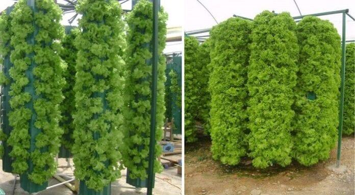 Aeroponia - agronomia