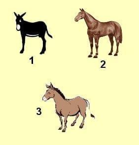 Especie biologica - caballo burro mula