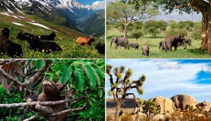 Importancia de los Hábitats Naturales