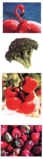 Carotenoides o tetraterpenoides