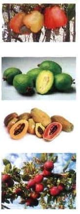 Propiedades antioxidantes en frutas tropicales