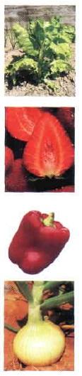Producto Nutraceútico - Carotenoides