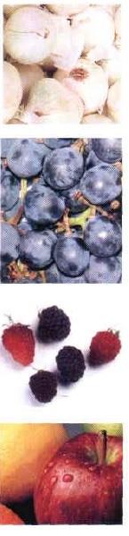 Producto Nutraceútico  - Flavonoides