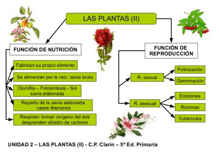 Esquema de Funciones de las Plantas