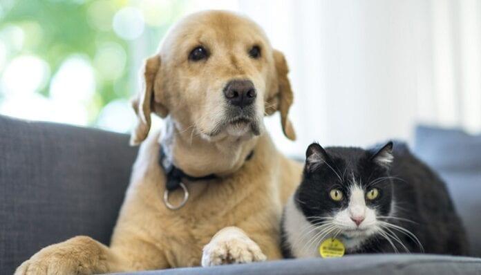 Las Mascotas NO Transmiten el Coronavirus