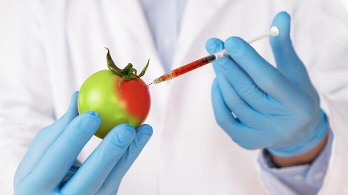 Organismo Genéticamente Modificado