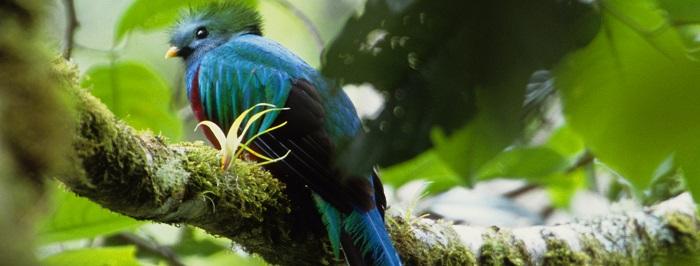 Avistamiento de Aves en Chiriqui