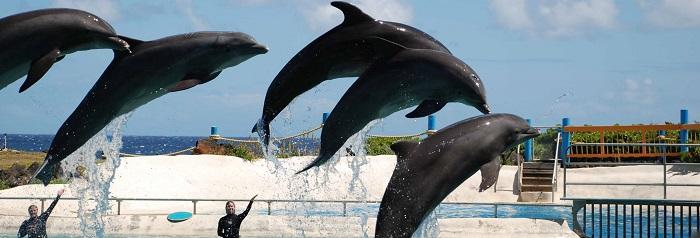 Parques en Punta Cana