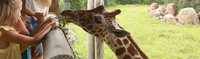 Zoológico de Jacksonville