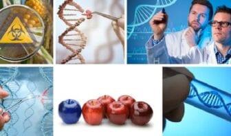 Contaminación Genética