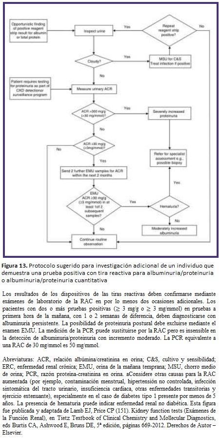 ERC - albuminuria/proteinuria