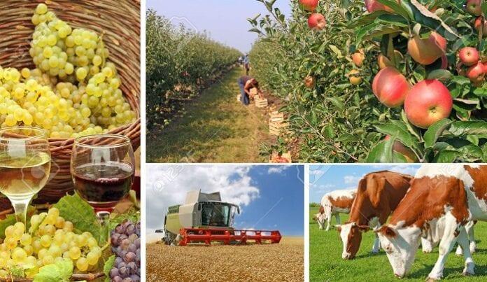 Empresas Agropecuarias