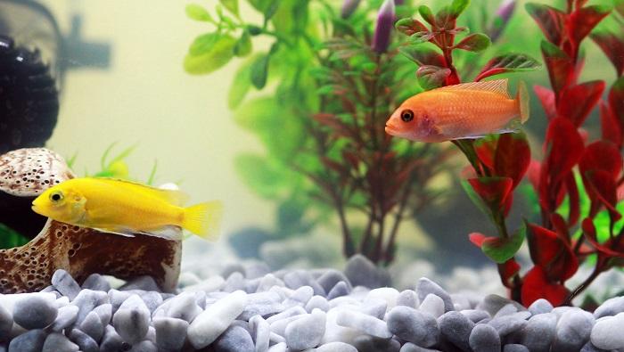 Feng Shui en peces