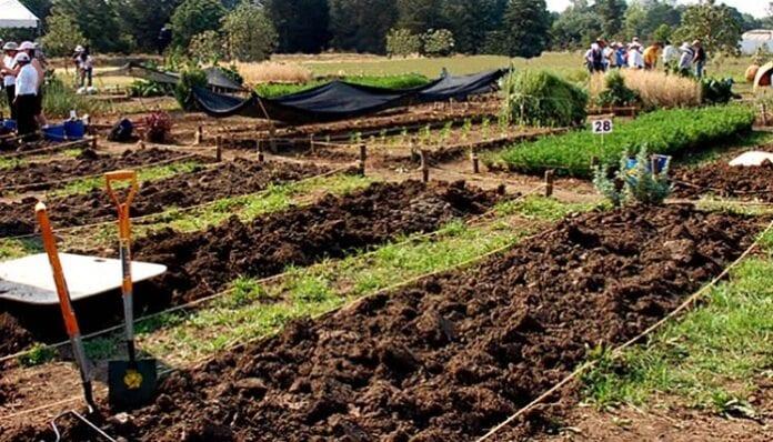 Agricultura Biointensiva