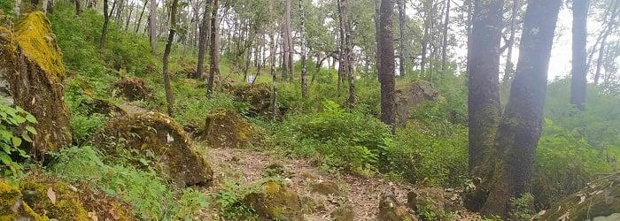 Bosques La Noria