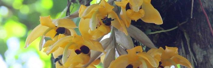 Parque Botánico Las Orquídeas