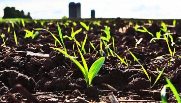 Suelo para la Agricultura