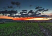 Agricultura Sensitiva