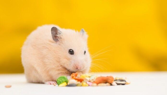 Alimentos Naturales para Hámsters