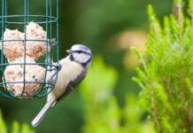 Mejores Alimentos Naturales para Pájaros