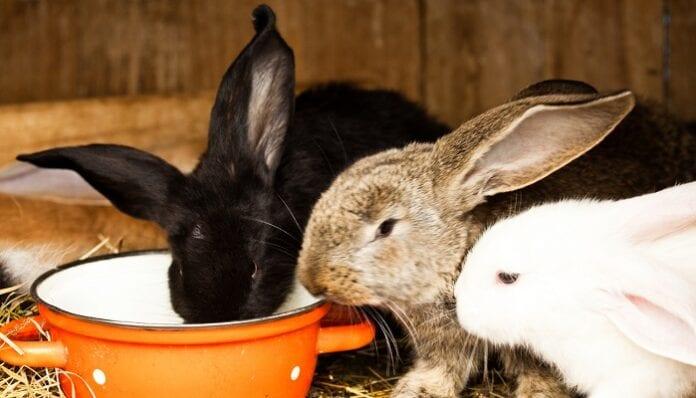 Alimentos Naturales para los Conejos
