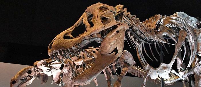 The Houston Museum of Natural Science, Museos para Visitar en Estados Unidos