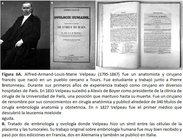 Alfred-Armand-Louis-Marie Velpeau (1795-1867) fue un anatomista y cirujano francés