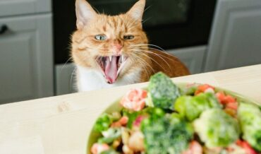 Alimentos Naturales para Gatos