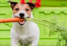 Alimentos Naturales para Perros