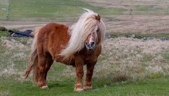 Alimentos Naturales para Ponys