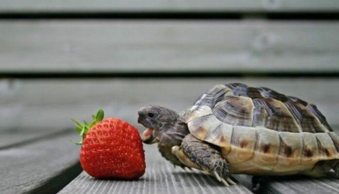 Alimentos Naturales para las Tortugas