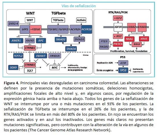 Carcinoma colorrectal Principales vías desreguladas