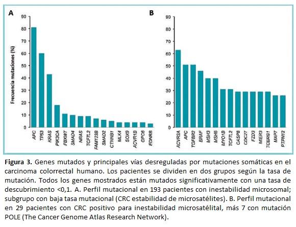 Genes mutados y principales vías desreguladas por mutaciones somáticas