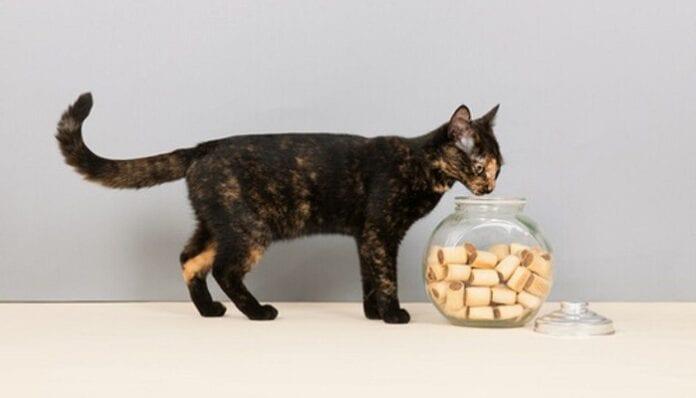 Snacks y Galletas Caseras para Gatos
