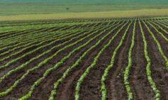 Producción Agropecuaria