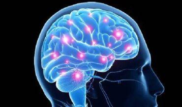 Cerebro Mente y Estrés