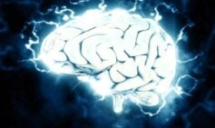 Cerebro, Mente y Estrés