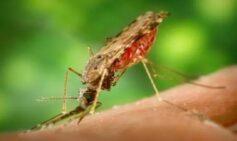 Guía de Atención de la Malaria