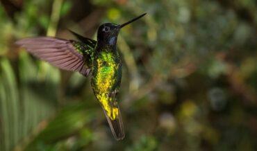 Fauna y Flora Endémica de Colombia