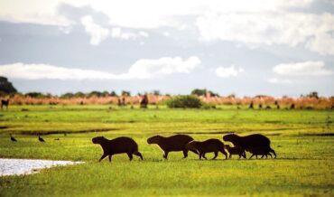 Llanos Colombianos