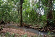 Bosque Tropical en Colombia