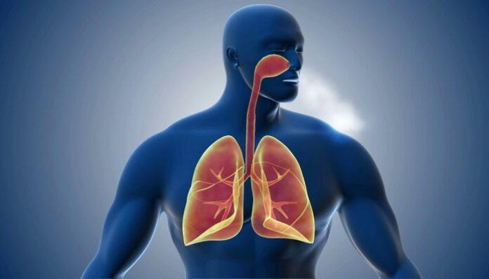 Sistema Respiratorio del Cuerpo Humano