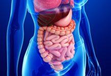 Aparato Digestivo del Cuerpo Humano