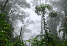 Ecosistemas Terrestres en Colombia