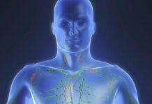 Sistema Linfático del Cuerpo Humano